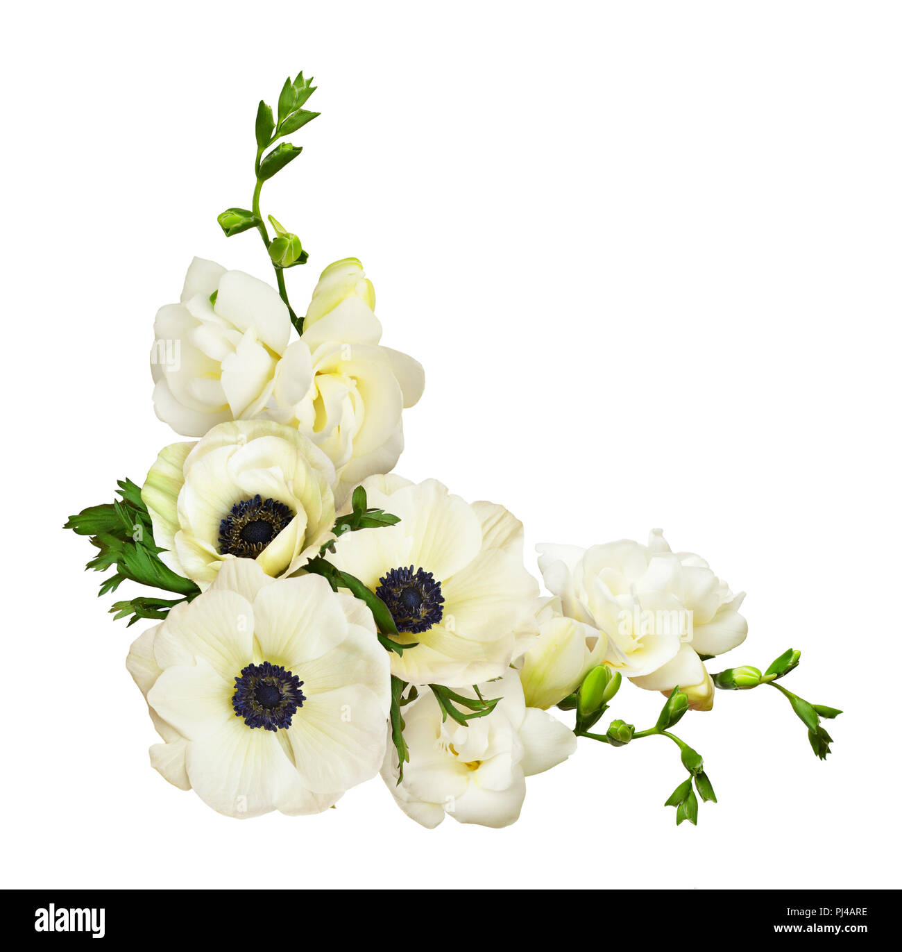 White anemones and freesia flowers in a corner arrangement isolated white anemones and freesia flowers in a corner arrangement isolated on white background flat lay top view mightylinksfo