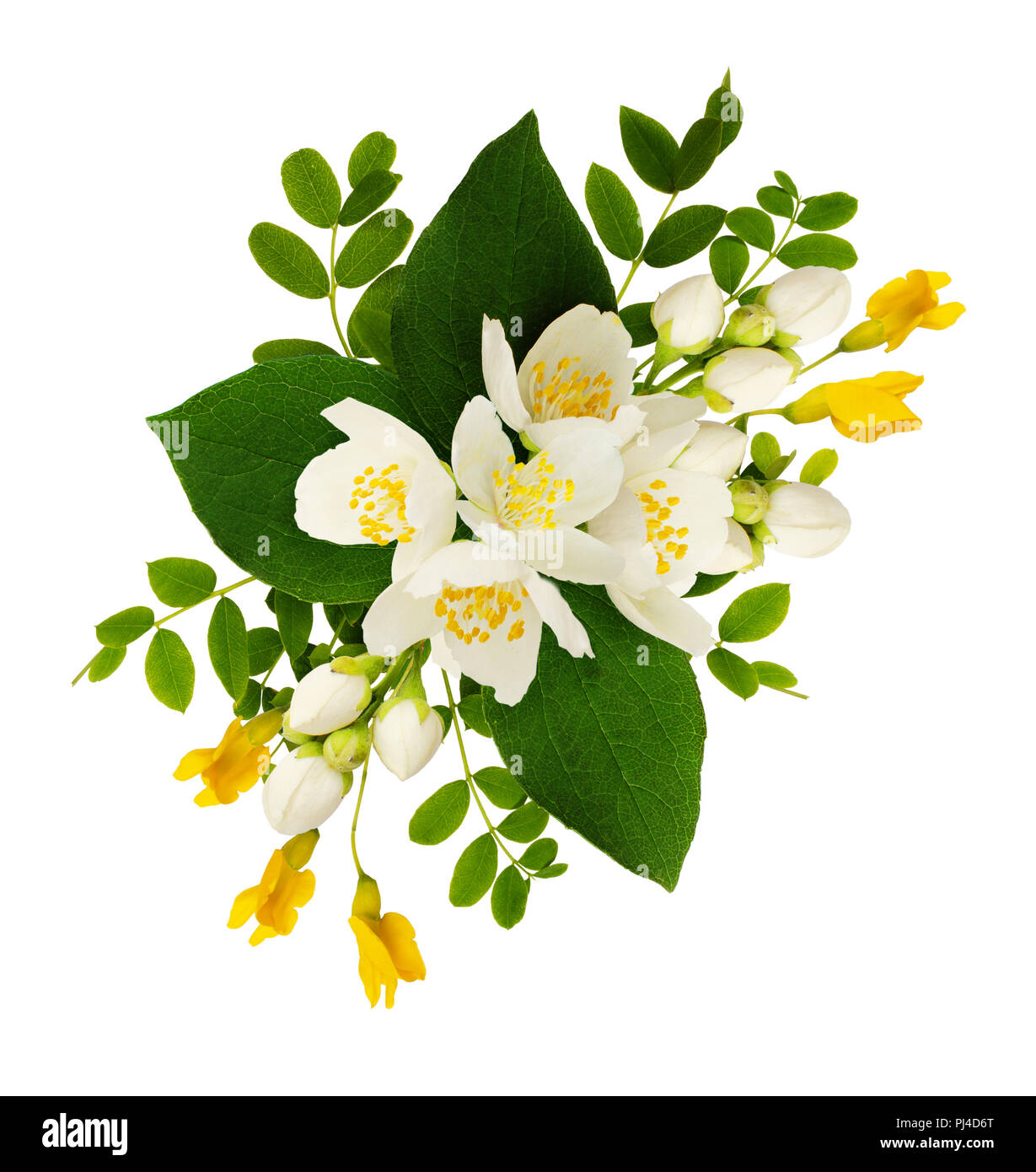 Jasmine and acacia flowers and leaves in floral arrangement isolated jasmine and acacia flowers and leaves in floral arrangement isolated on white izmirmasajfo