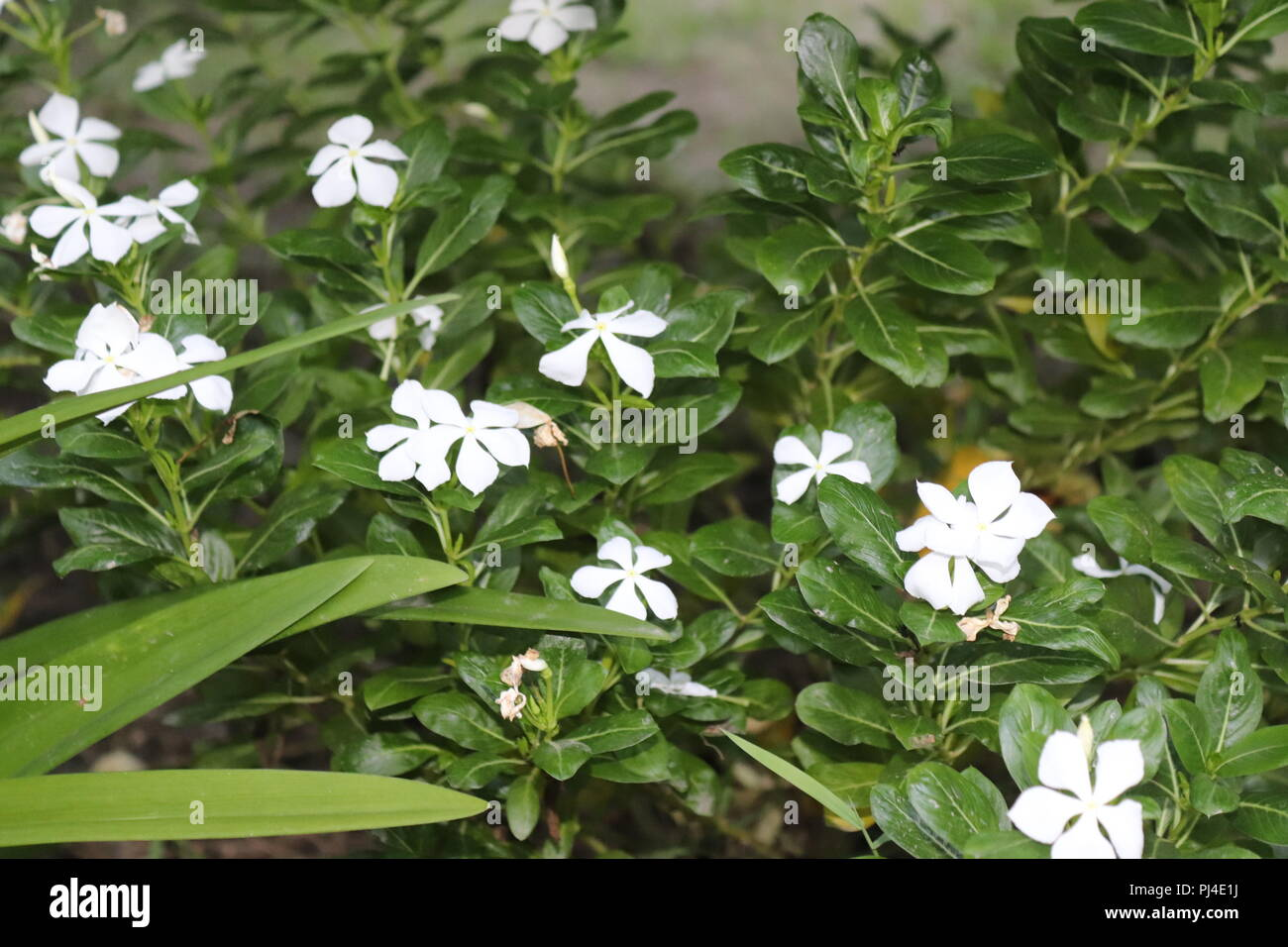 Pink Flowers Pic Stock Photos Pink Flowers Pic Stock Images Alamy