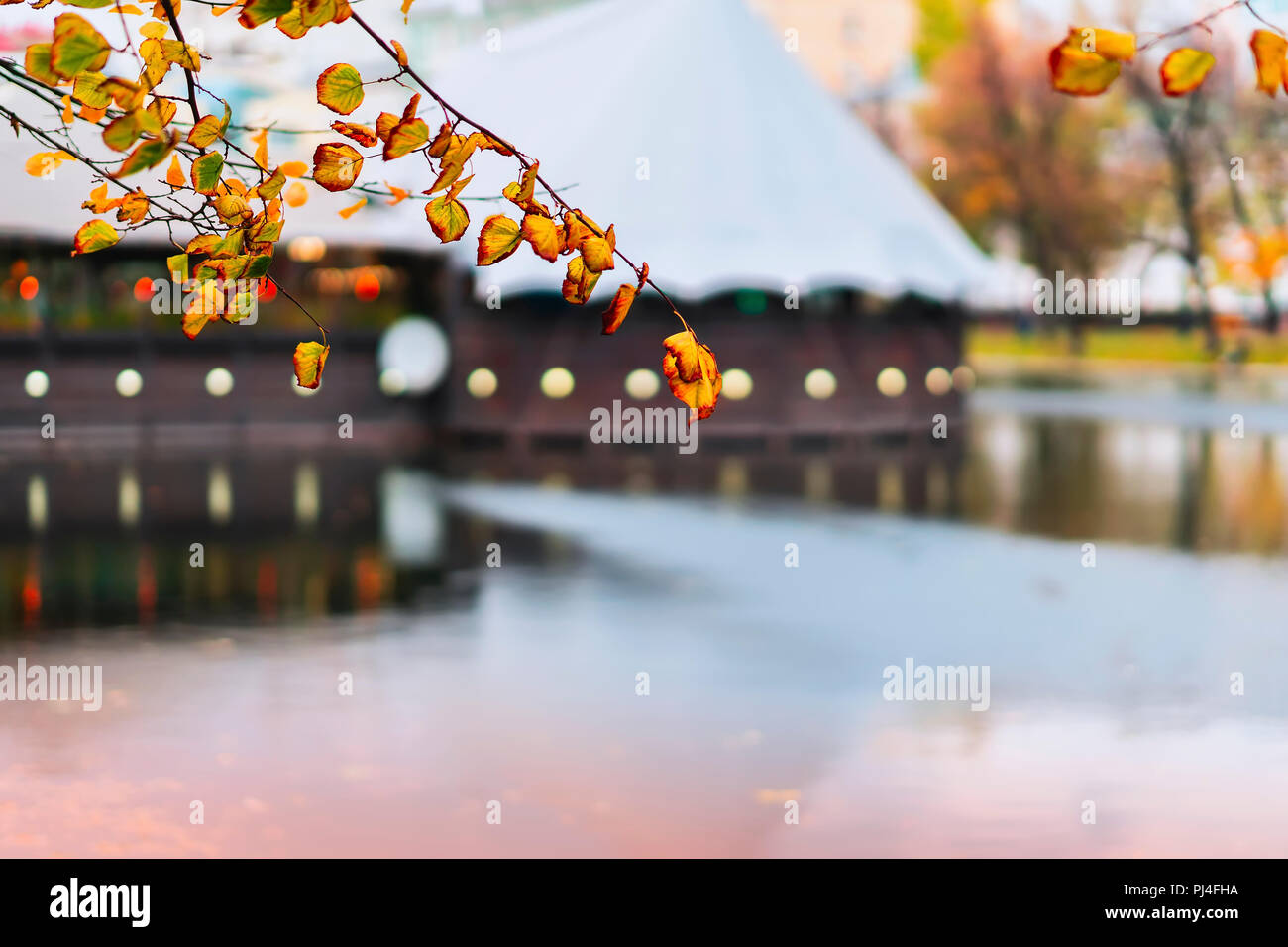 Colorful branch with leaves in autumn over blue water, bright reflections in water, architectural tented buildings in the park. Romantic mood, concept of nostalgia. Natural blurred background - Stock Image