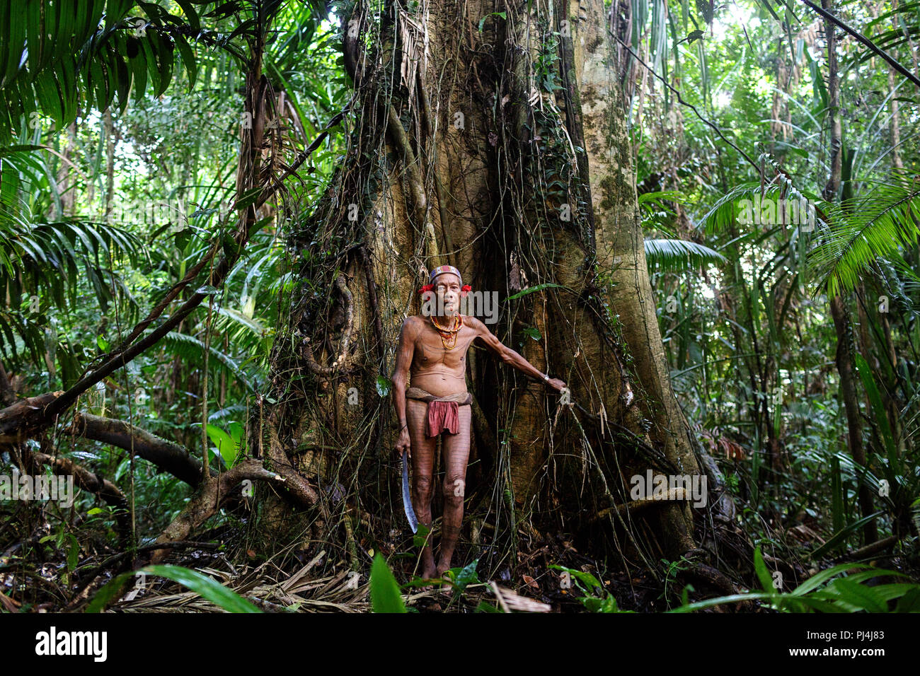 Old shaman of Mentawai tribe covered with tatoo standing at an old tree in dense jungle with a sword in his hands, Siberut, Sumatra, Indonesia - Stock Image
