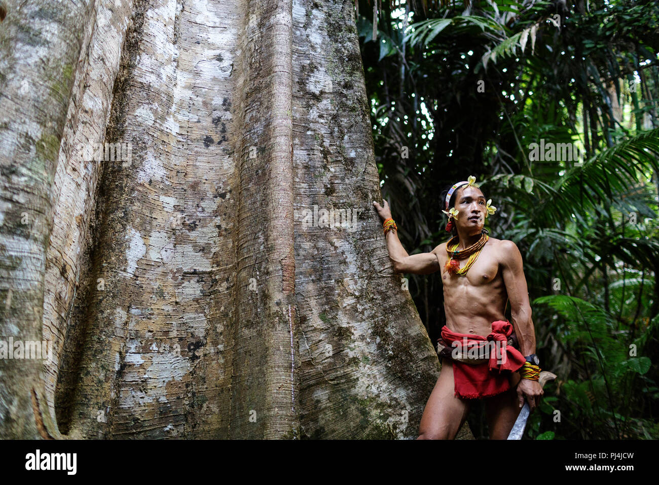 Young shaman leaning on a huge tree with his hand and a sword in the other hand, Mentawai, Siberut, Sumatra, Indonesia - Stock Image