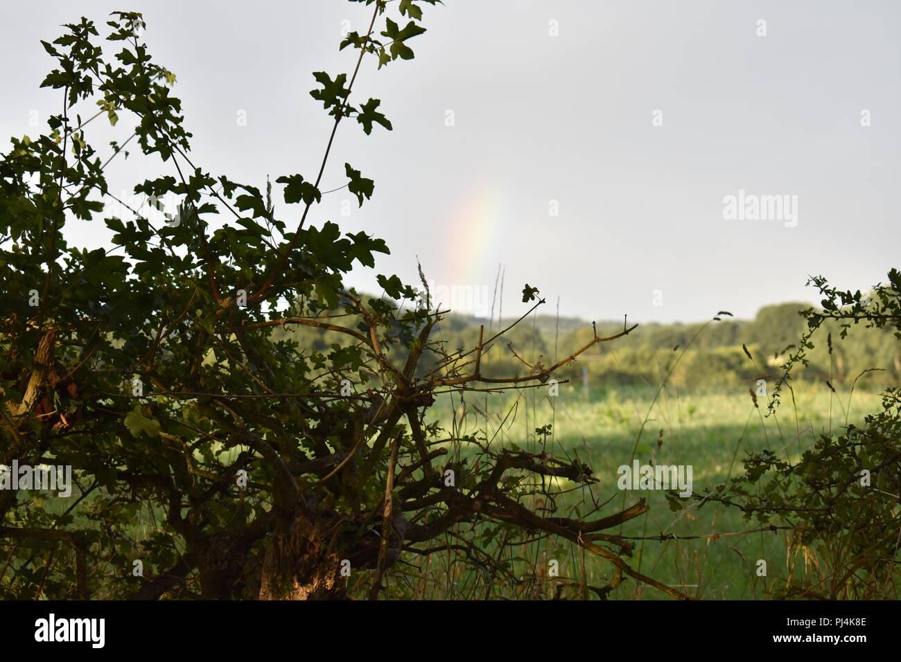 A rainbow over a rural farmland hedge - Stock Image