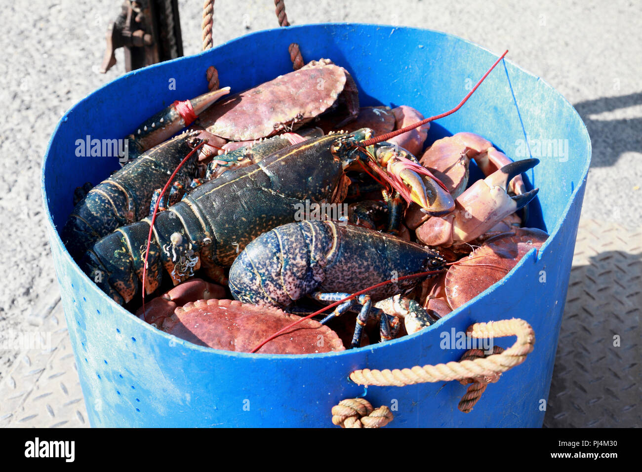A bucket of freshly caught crabs and lobsters lifted quickly off the fishing boat on to the quay - Stock Image