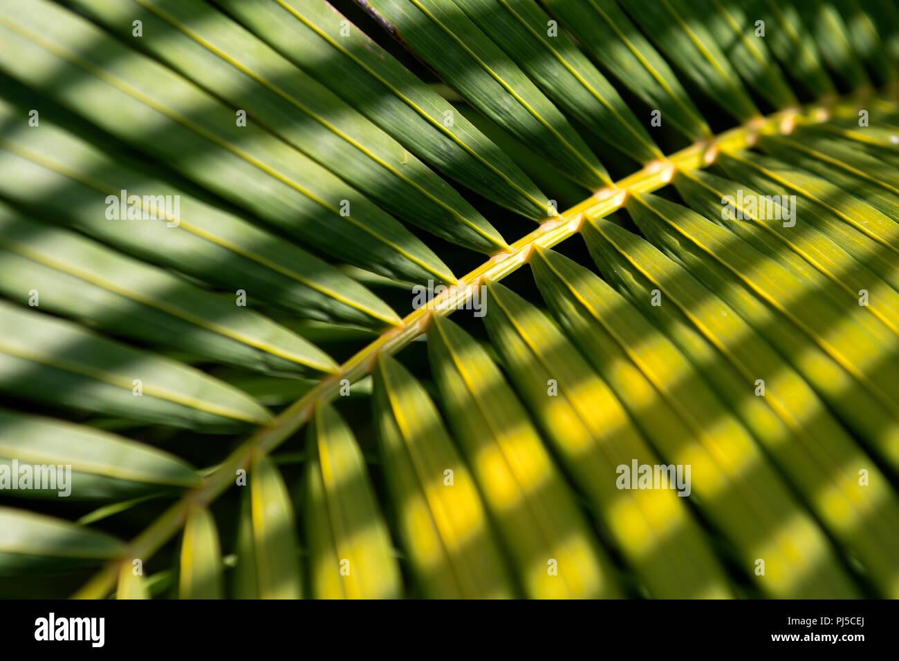 Palm Tree Leaf - Stock Image