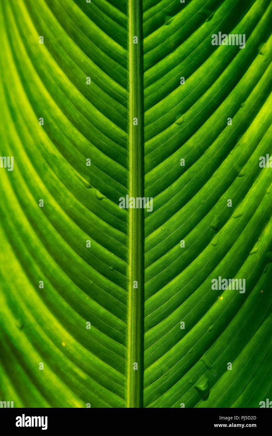Tropical Leaves - Stock Image