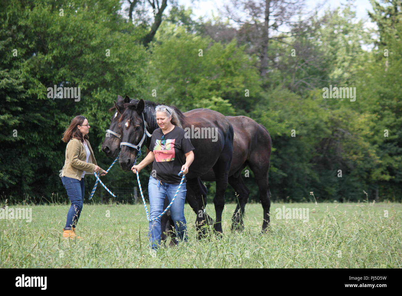 Two farm women leading two Percheron draft horses at Wagner Farm in suburban Glenview, Illinois on a summer day. - Stock Image