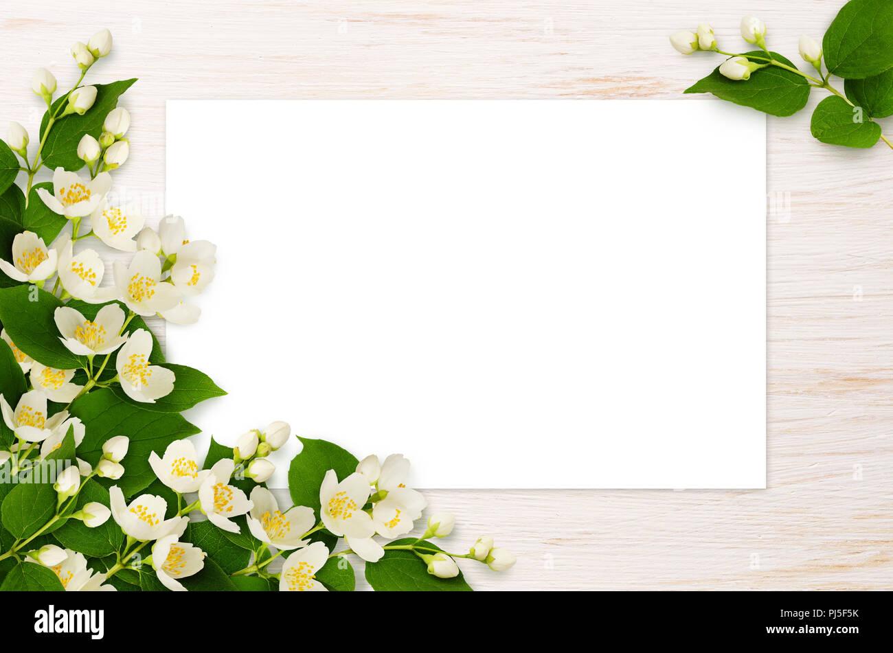 Corner arrangements with jasmine flowers and leaves on white wooden corner arrangements with jasmine flowers and leaves on white wooden background flat lay top view izmirmasajfo