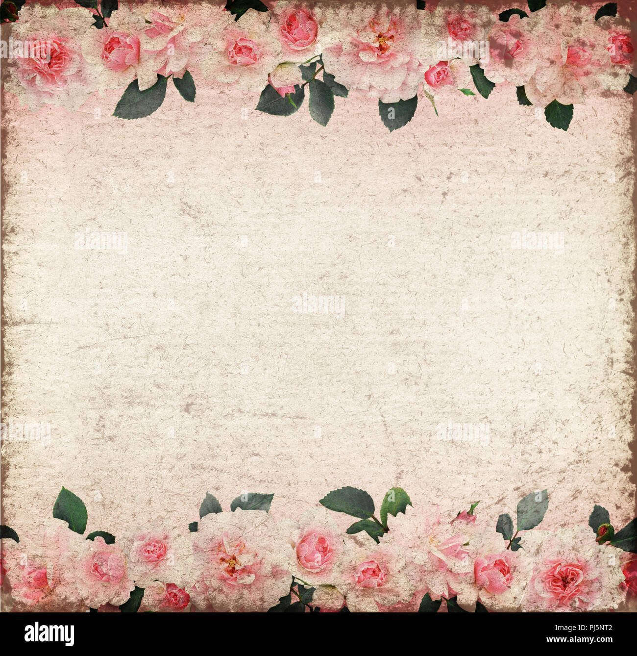Pink Rose Flowers And Leaves In A Line Compositions On Old Paper