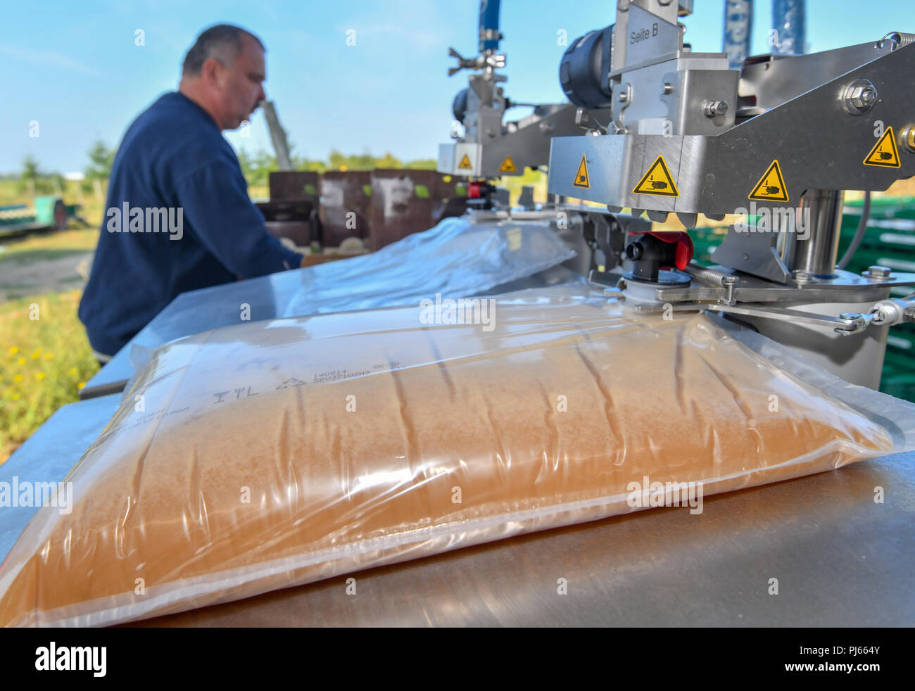 04.09.2018, Brandenburg, Frankfurt (Oder): Freshly squeezed apple juice is filled into a five litre tube bag on Mario Flach's mobile must crusher from Berlin. The mobile apple juice press tours Berlin and Brandenburg. From a quantity of 100 kilograms of apples, everyone can have their own apple juice pressed here. After pressing, the juice is heated to 80 degrees Celsius and filled into three or five litre tubular bags. From 100 kilograms you can squeeze about 50 to 60 litres of juice. Photo: Patrick Pleul/dpa-Zentralbild/ZB - Stock Image