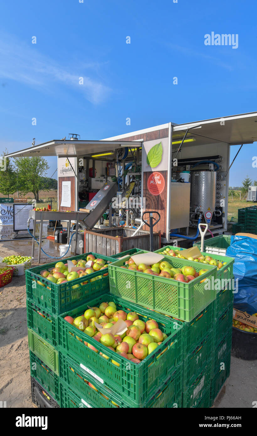 04.09.2018, Brandenburg, Frankfurt (Oder): Many apples in baskets stand in front of Mario Flach's mobile cider crusher from Berlin. The mobile apple juice press tours Berlin and Brandenburg. From a quantity of 100 kilograms of apples, everyone can have their own apple juice pressed here. After pressing, the juice is heated to 80 degrees Celsius and filled into three or five litre tubular bags. From 100 kilograms you can squeeze about 50 to 60 litres of juice. Photo: Patrick Pleul/dpa-Zentralbild/ZB - Stock Image