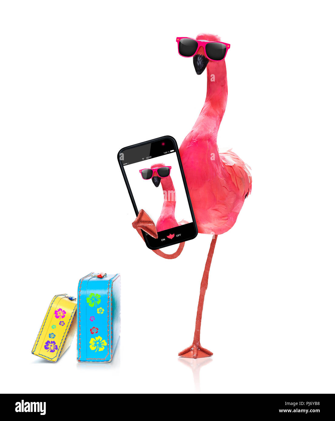pink gay flamingo taking a selfie, on summer vacation holidays, isolated on white background - Stock Image