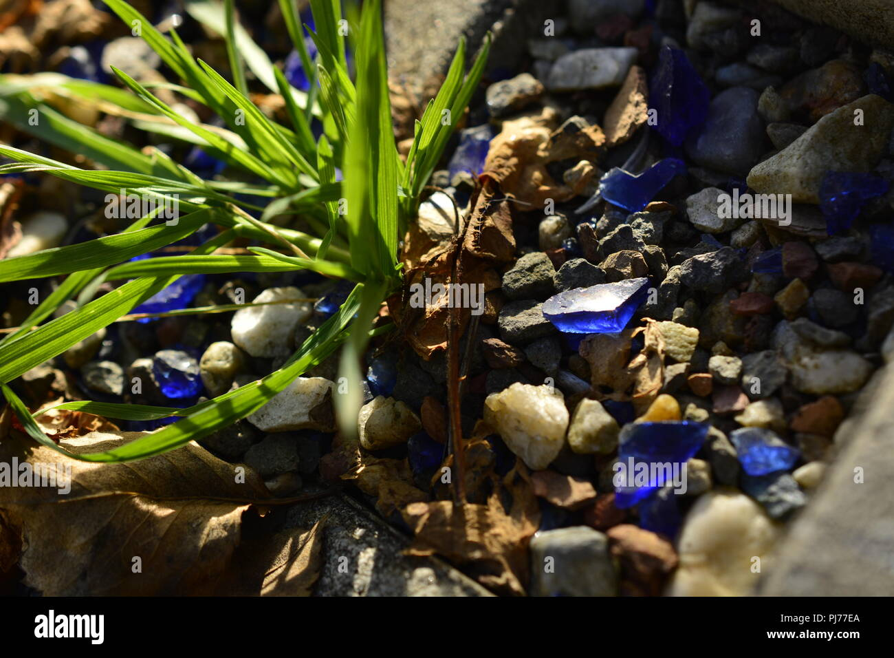 pebbles and glass stones in different colors decorating a grass ...