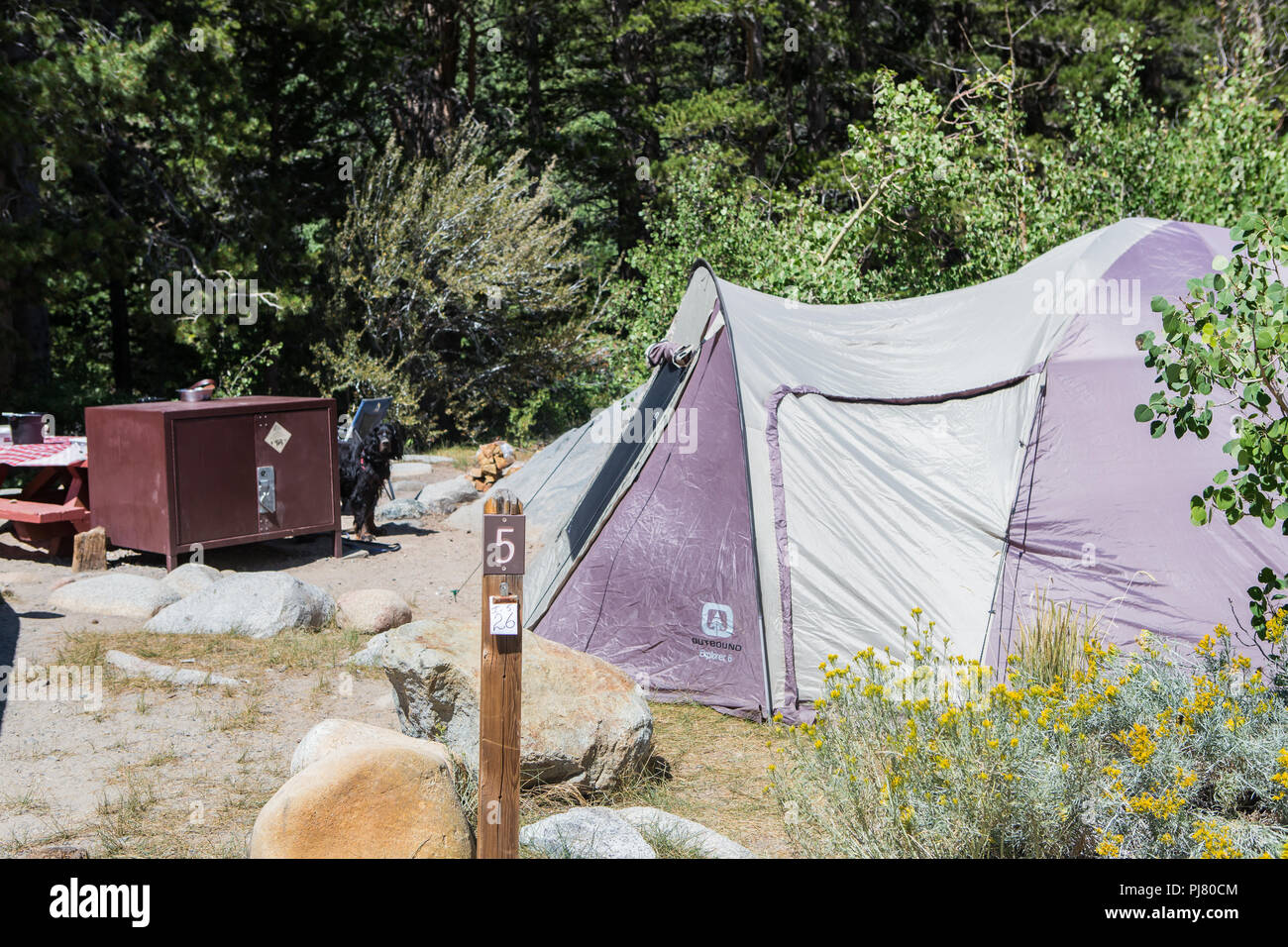 Tent campsite with family pet dog - Stock Image