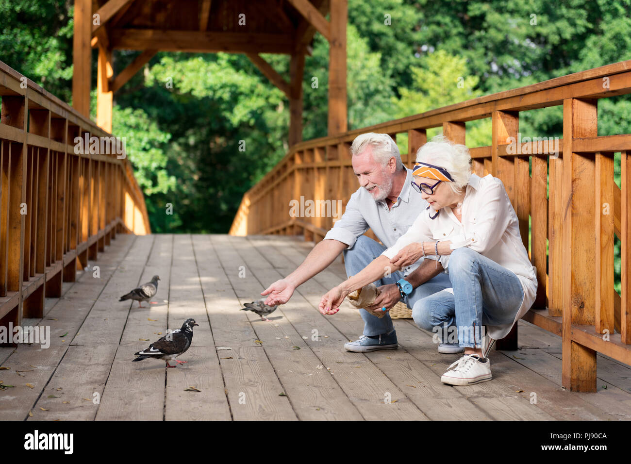 Bearded senior man joining his wife feeding baguette to pigeons - Stock Image