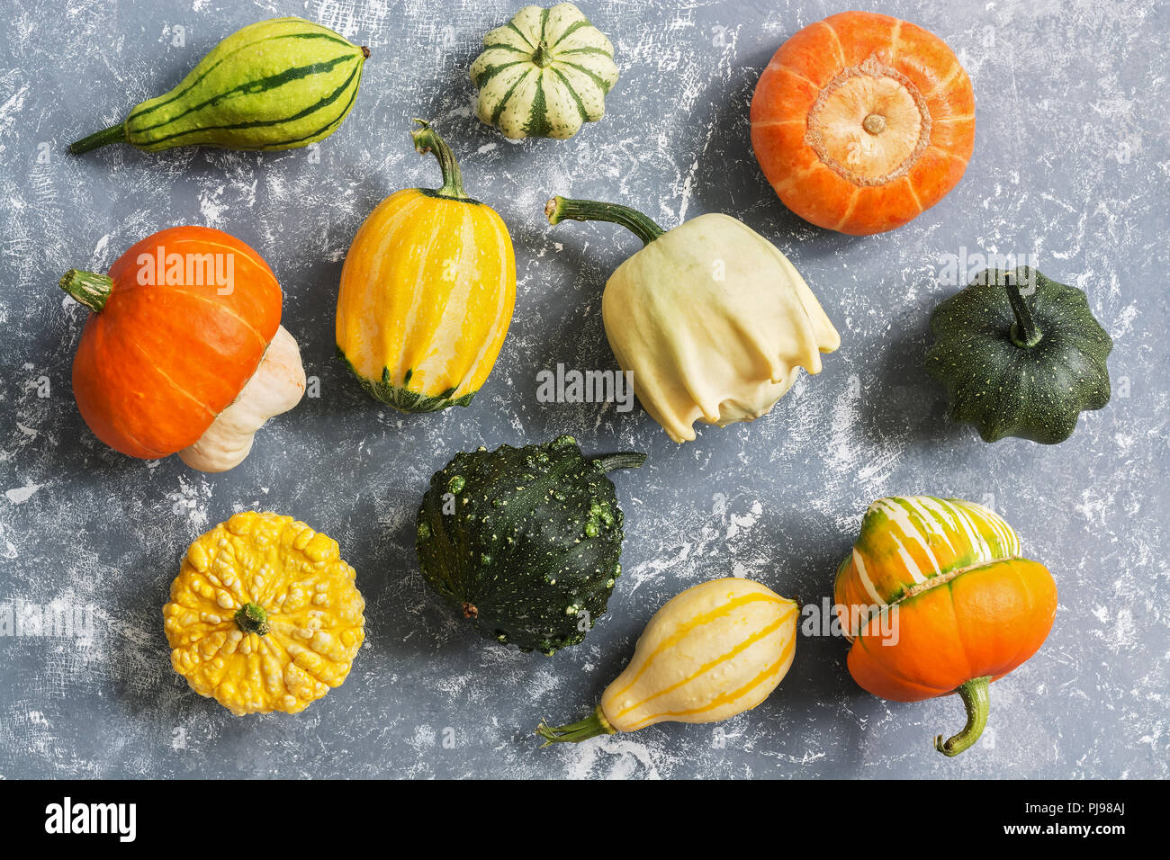 A variety of colorful pumpkins on a gray background, view from above. Flat lay - Stock Image