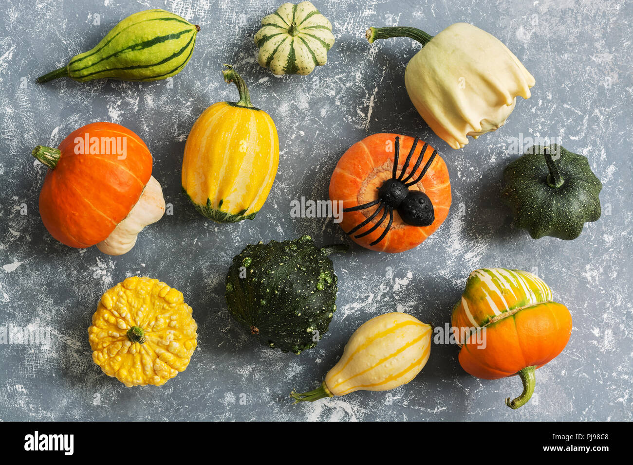 Harvest a variety of pumpkins and spiders on a gray background. Halloween. Top view - Stock Image