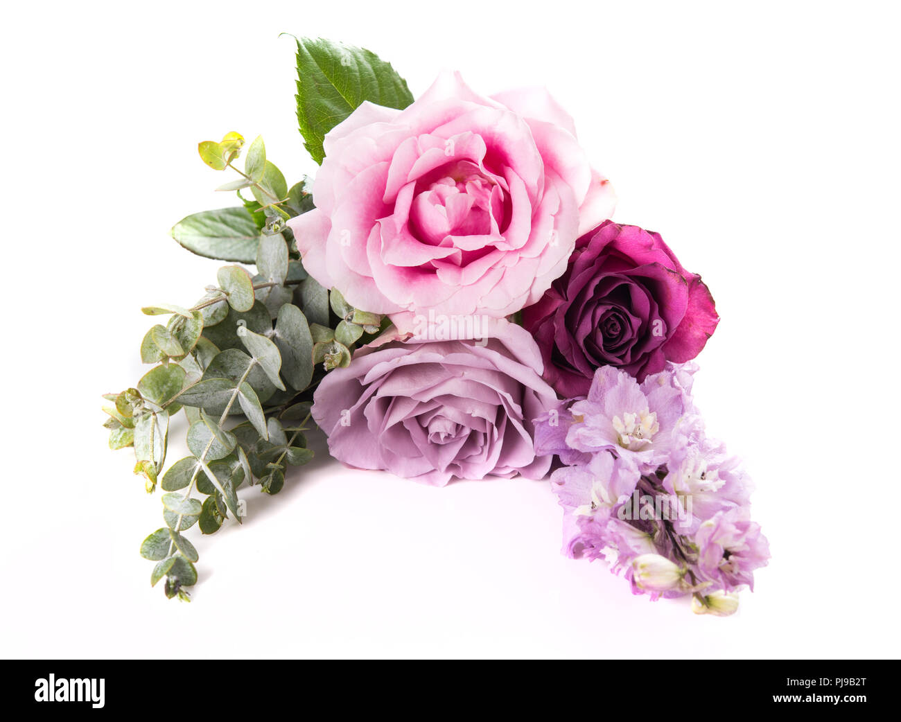 Pink and purple roses with leaves isolated on white background, three flowers arrangement Stock Photo
