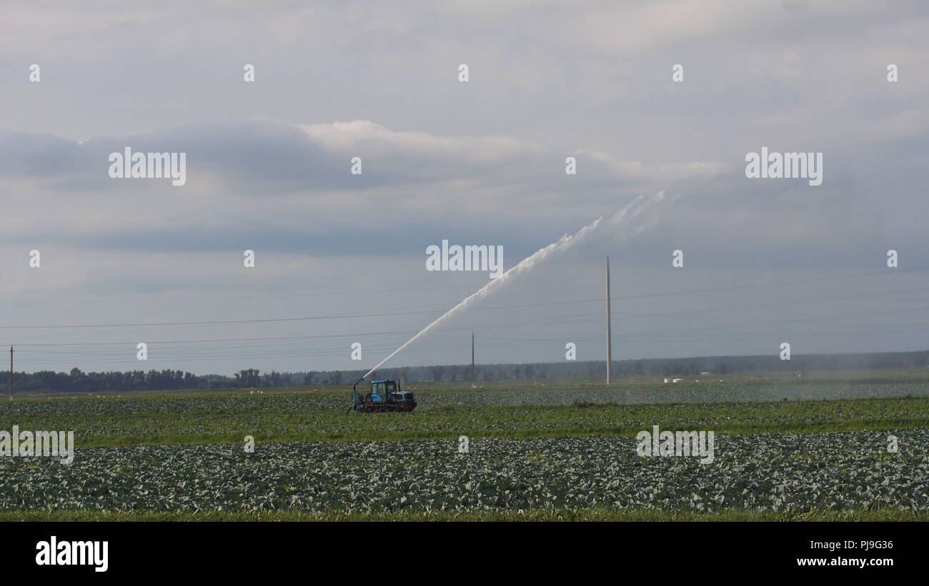 Aerial view: Irrigation equipment watering cabbage field. Irrigation system watering farm field. - Stock Image