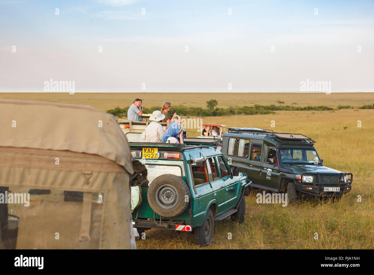Game drive with tourists watching the wildlife on the savanna in Africa - Stock Image