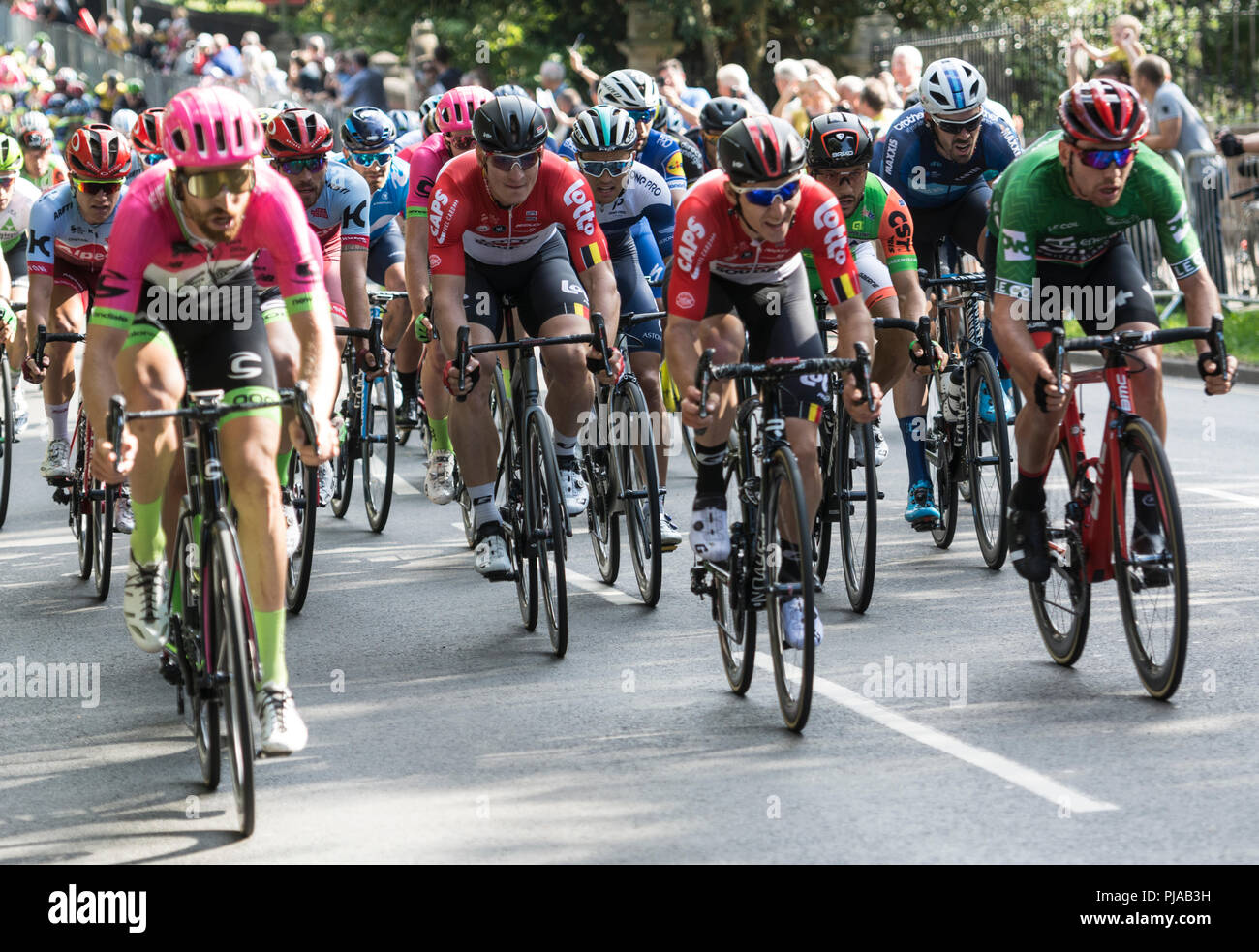 Leamington Spa, UK. 5th September 2018. Leamington Spa, Warwickshire, England, UK. The leading peloton approaches the finish of the 4th stage of the Ovo Energy Tour of Britain in Leamington Spa. Prominent is German rider Andre Greipel (black helmet) of the Lotto Soudal team who won this stage which started in Nuneaton. - Stock Image
