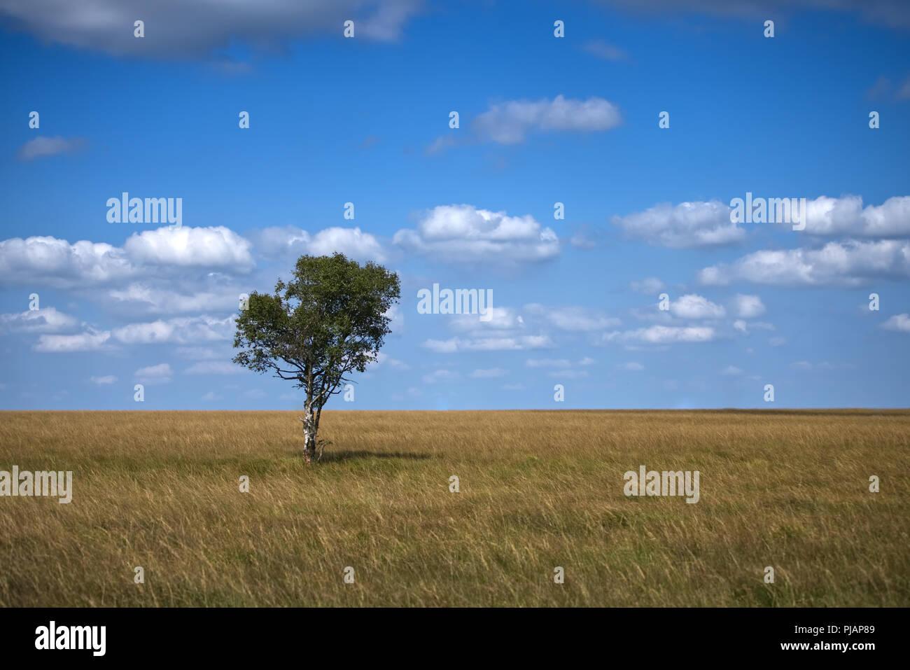 lonely tree - Hohes Venn Stock Photo