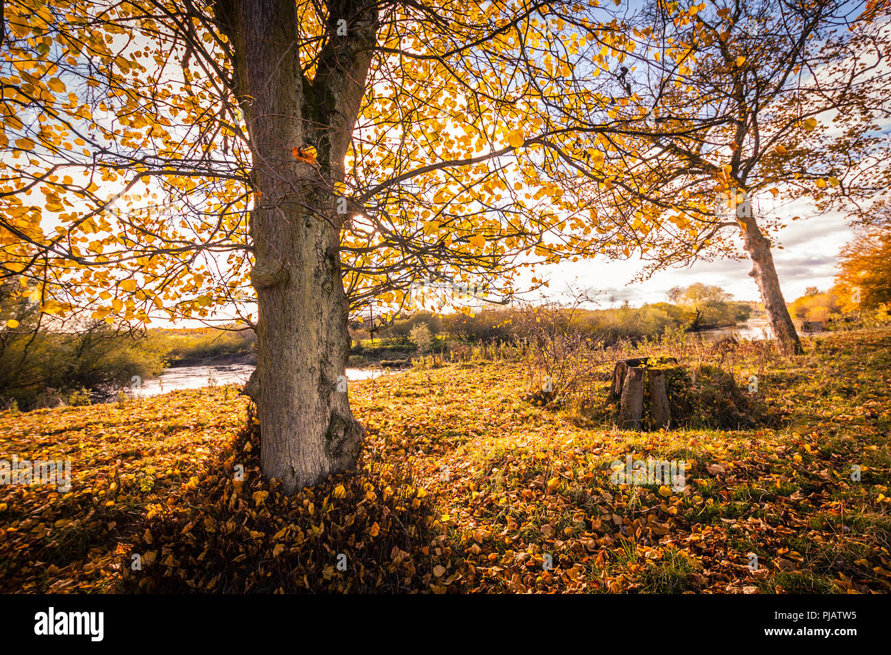 Beautiful Autumn in the park in Motherwell, Scotland, UK Stock Photo
