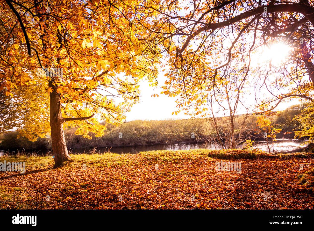 Beautiful Autumn in the park in Motherwell, Scotland, UK Stock Photo