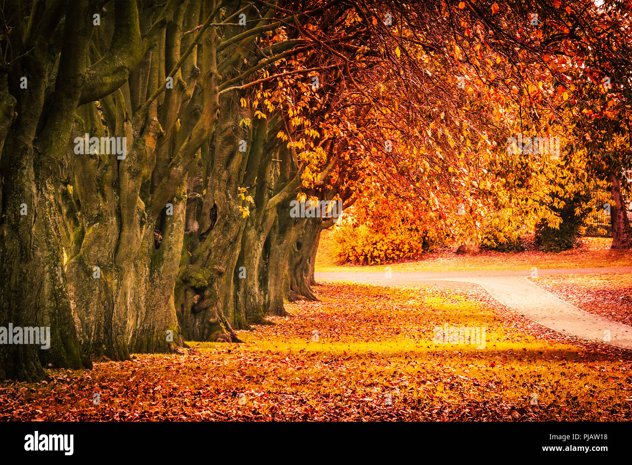 Beautiful autumn scenery with line of trees and and a road in the park, Scotland Stock Photo