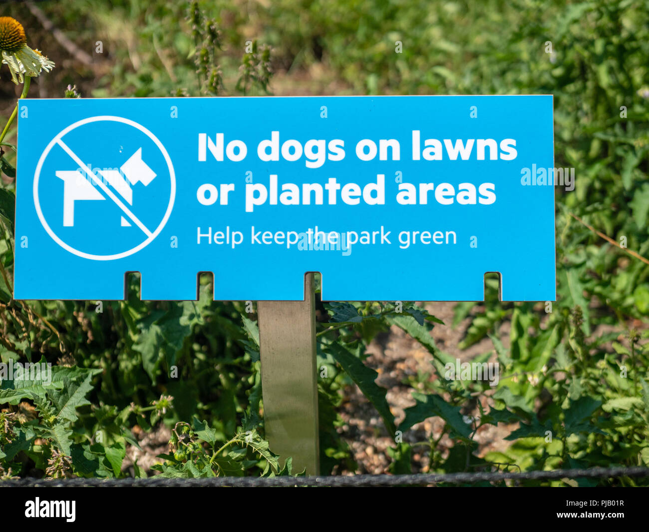 A no dogs on lawns or planted areas, help keep the park green sign - Stock Image
