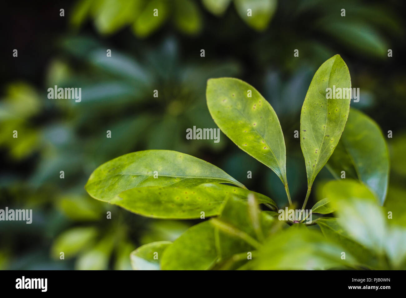 Close up plant - Stock Image