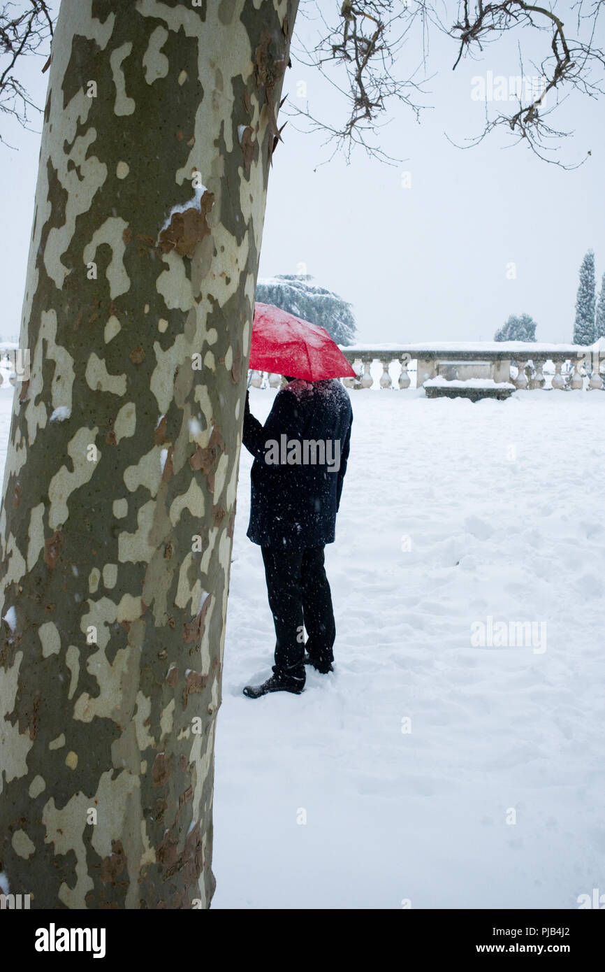 enigmatic rear view of man standing in snow holding a bright red umbrella slightly obscured by birch tree in french park, Montpellier, france - Stock Image