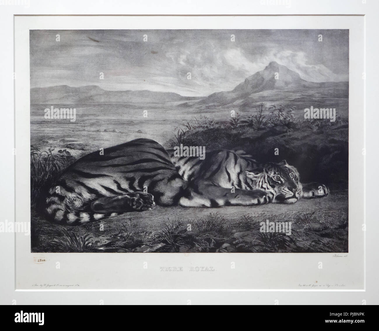 Lithography 'Royal Tiger' (1829-1830) by French Romantic artist Eugène Delacroix displayed at his retrospective exhibition in the Louvre Museum in Paris, France. The exhibition presenting the masterpieces of the leader of French Romanticism runs till 23 July 2018. - Stock Image