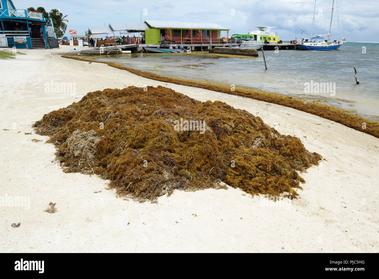 Seaweed Caribbean Stock Photos & Seaweed Caribbean Stock Images - Alamy
