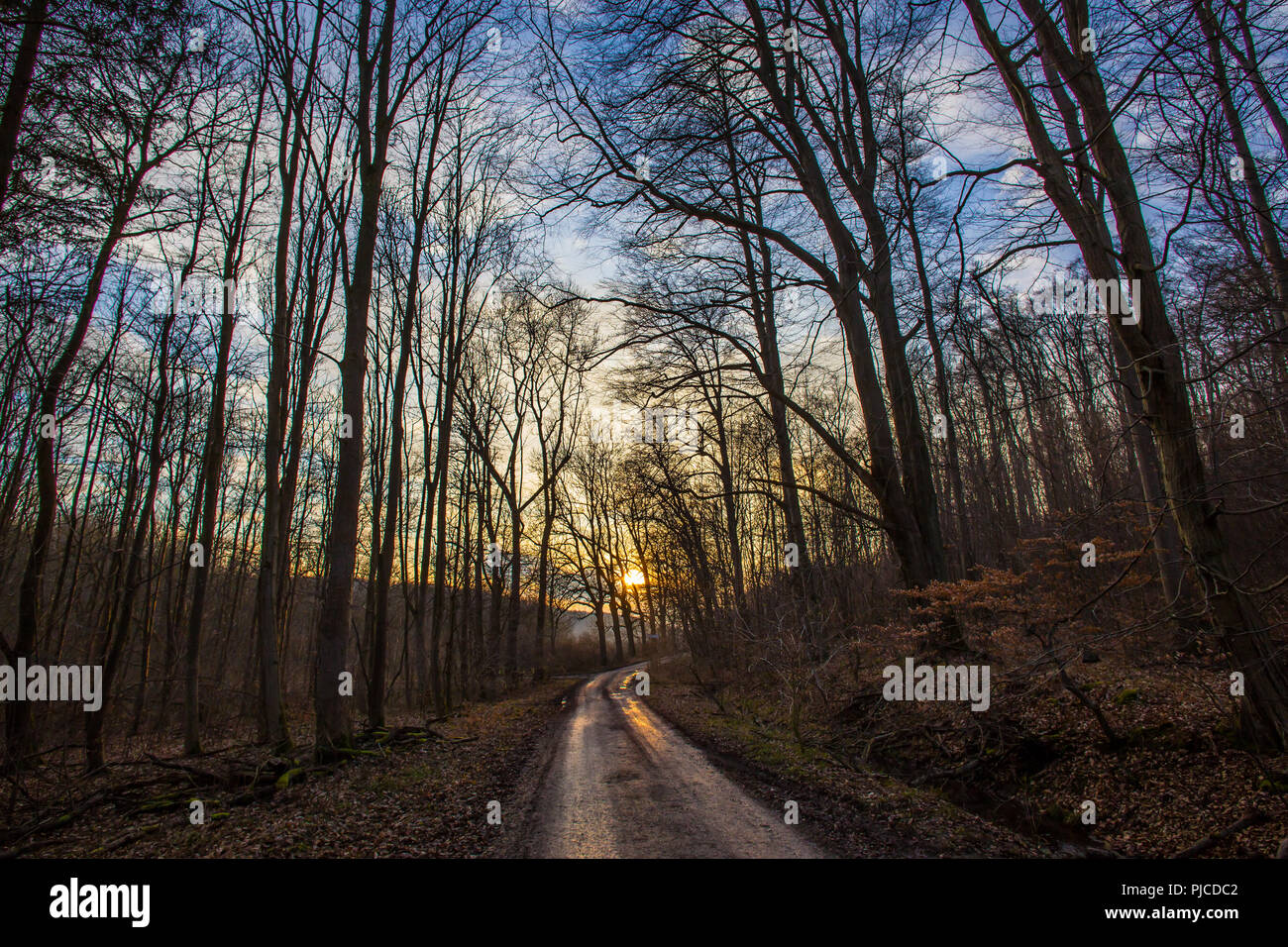 Sunset on mountain forest pathway with leafless trees at the end of winter before spring - Stock Image