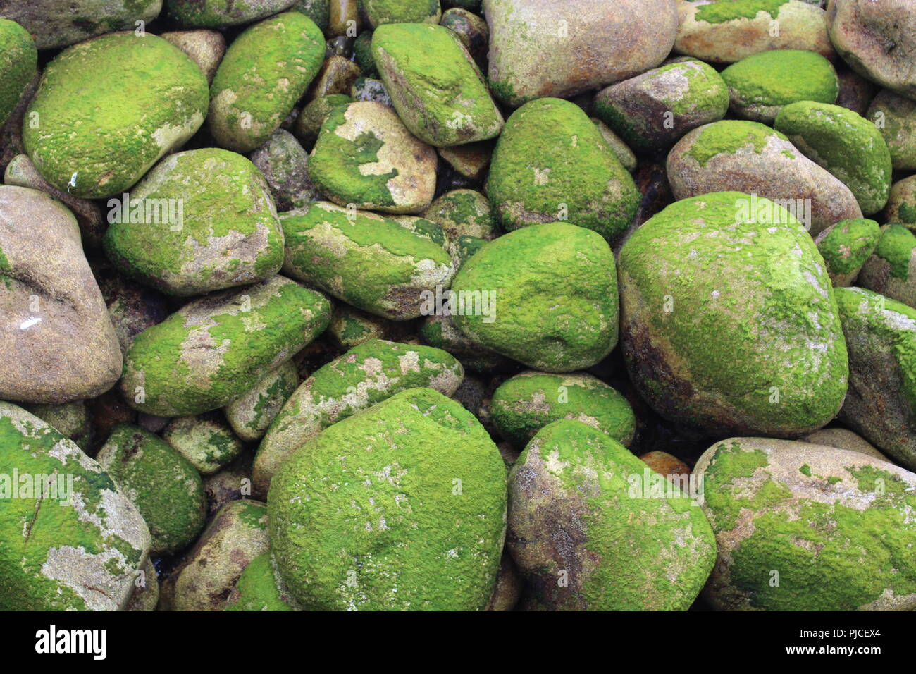 Green stones by the beach in the Cies Islands. - Stock Image