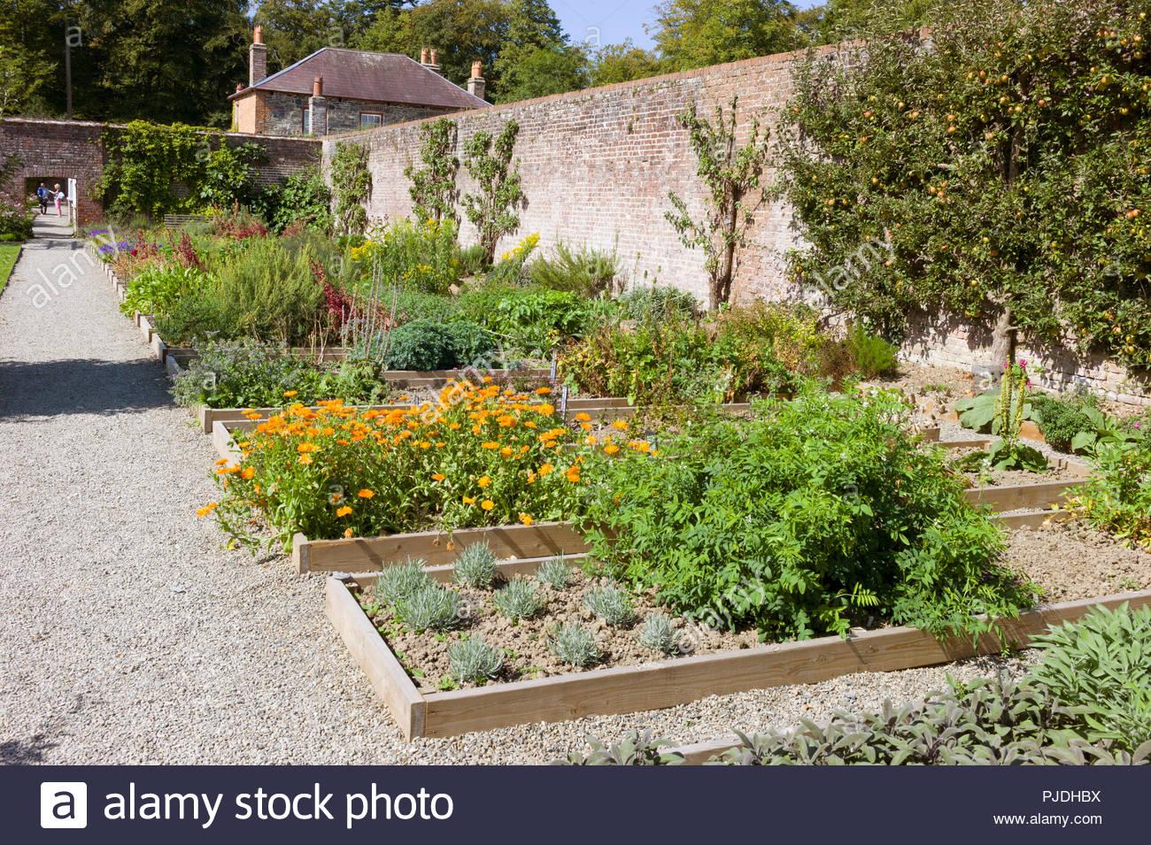 The herb garden borders in the walled kitchen garden at Llanerchaeron villa, Ceredigion, Wales, UK Stock Photo