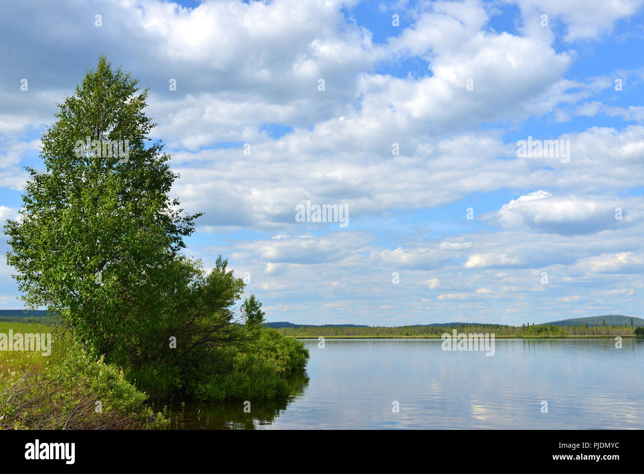 Summer landscape. Picturesque lake with with bush on shore in Finnish Lapland - Stock Image