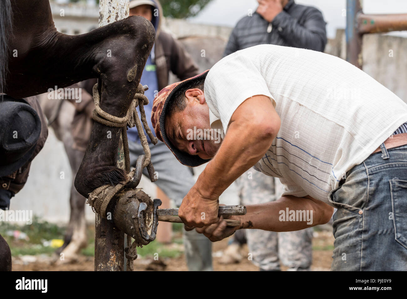 Karakol, Kyrgystan, August 13 2018: Farrier on the weekly animal market in Karakol changes horses' horseshoes - Stock Image