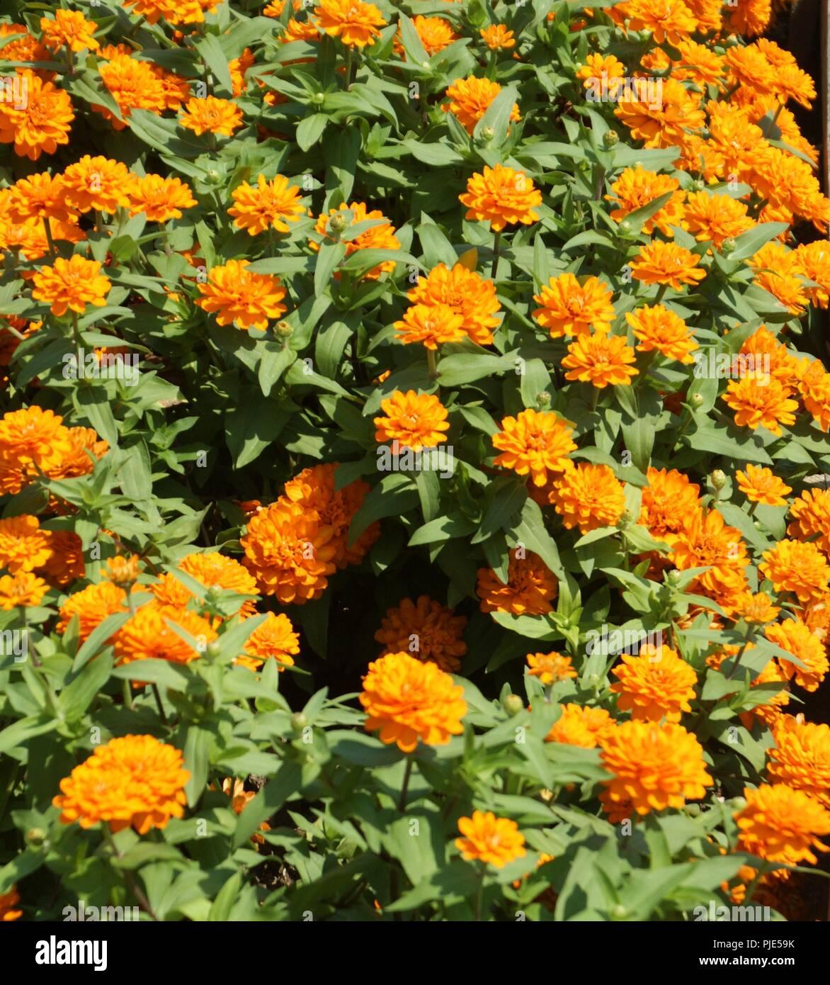 Aménagement D Un Parterre De Fleurs massif de fleurs décoratives en aménagement paysagé d'un