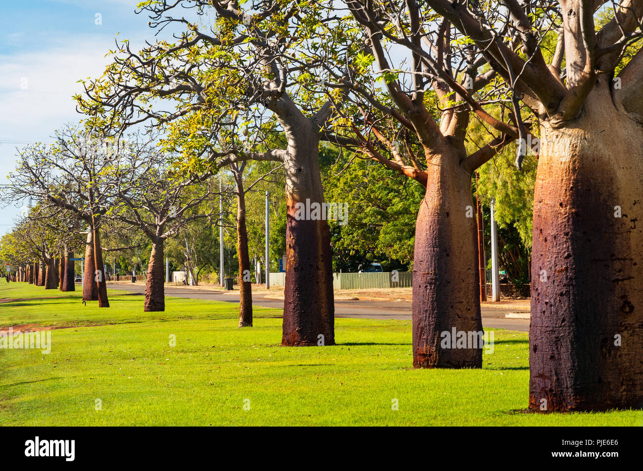 Boab Alley in main street of Derby. - Stock Image