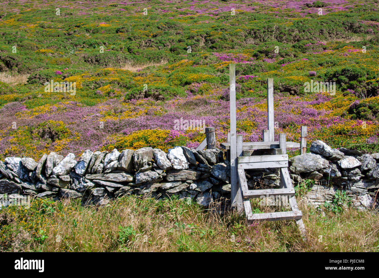A simple wooden stile over a dry stone wall allows walkers access to the unspoilt heather and furze strewn highland hills. Heaven on earth. - Stock Image