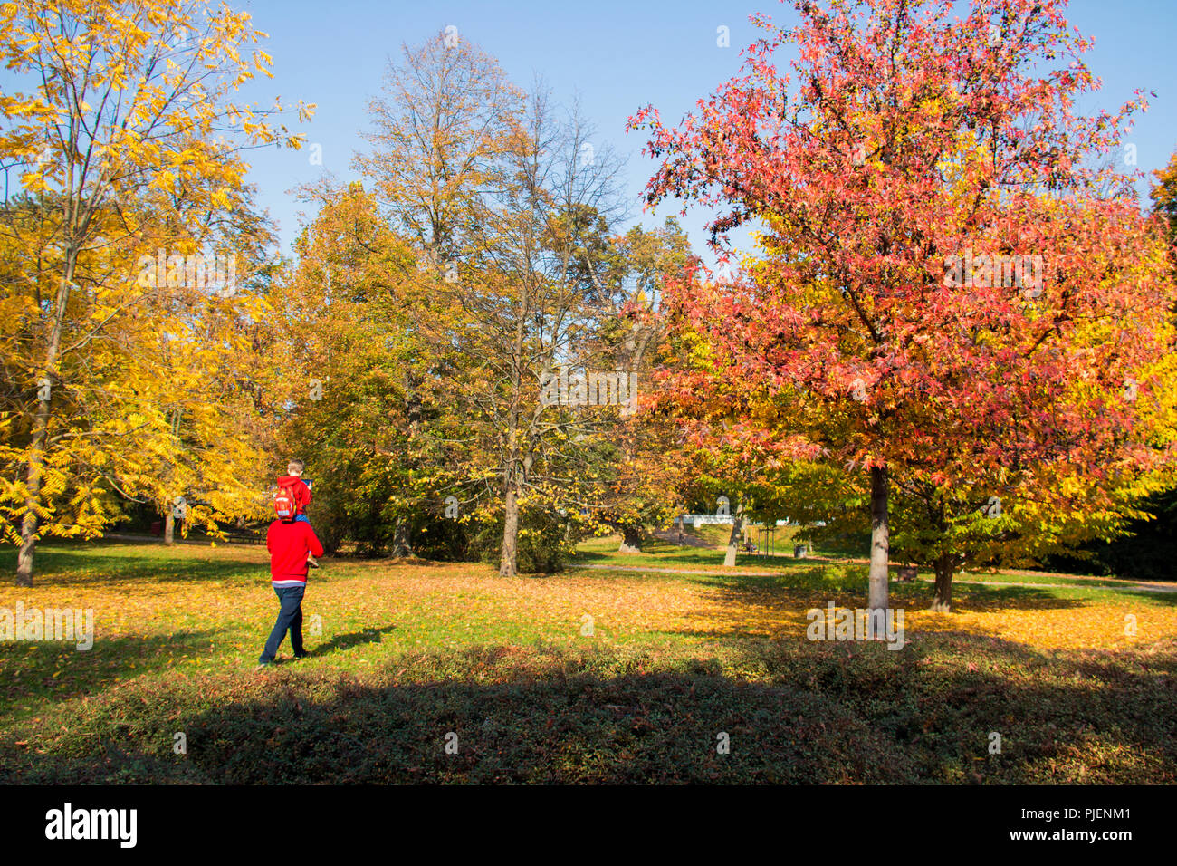 Autumn park with colourful trees and autumn leaves, father is caring his son on the shoulders and walking through the grass in the city park Stock Photo