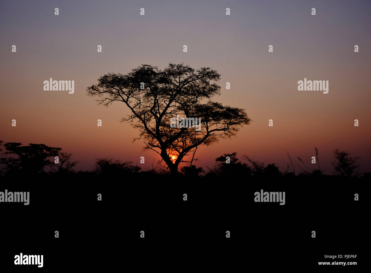 African sunset in Botswana with Acacia tree in silhouette - Stock Image