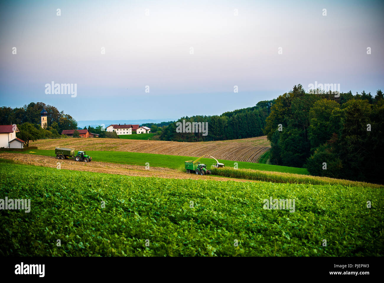 Marktl,Germany-August 5,2018: farmers bring in the corn crop early in the evening. - Stock Image