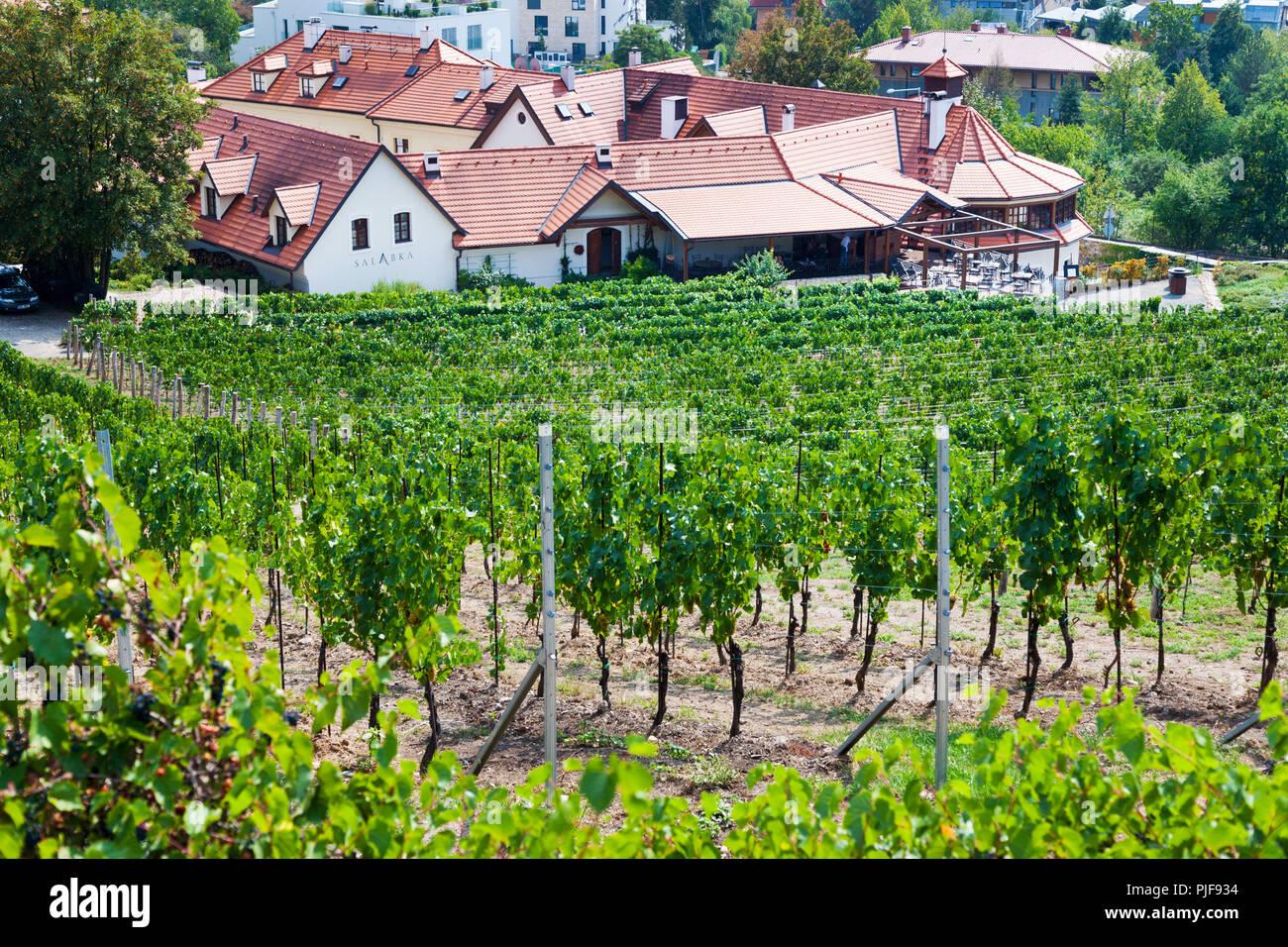 Bildresultat för salabka vineyard