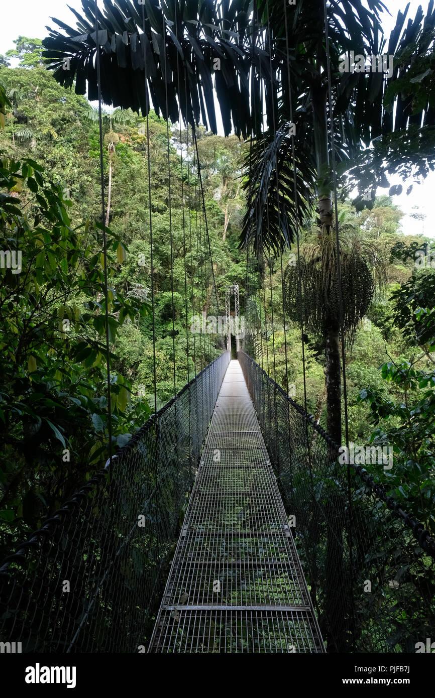 hanging bridge in costa rica - Stock Image