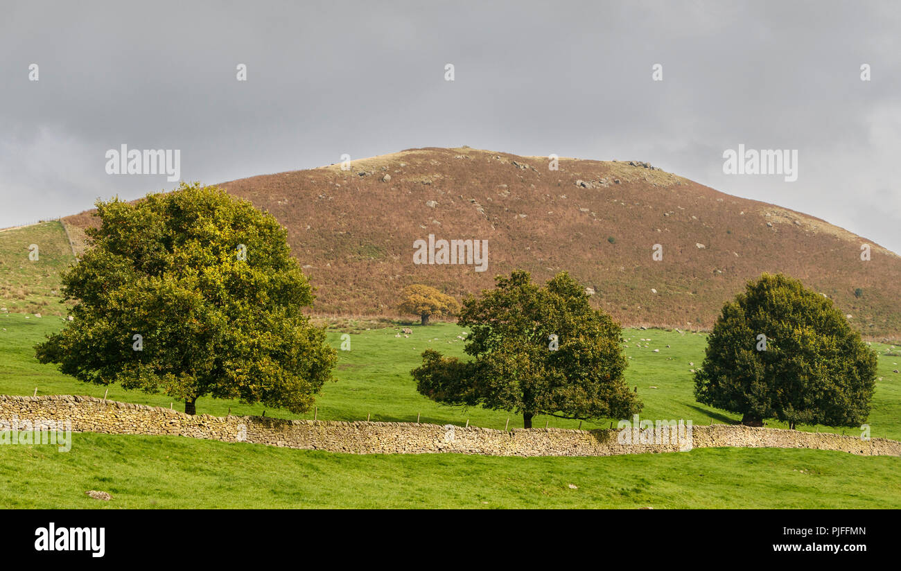 Three trees and a low stone wall stretch across a moorland countryside landscape in Yorkshire, UK. Stock Photo
