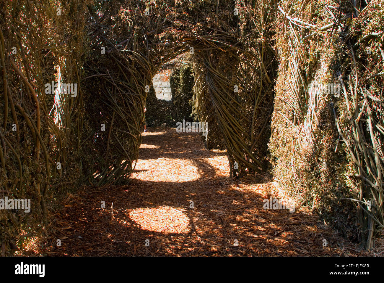 France, North-Western France, Nantes, moats of the Chateau des Ducs during the 'Voyage à Nantes' festival, summer 2014, labyrinth of willow branches by the US artist Patrick Dougherty - Stock Image