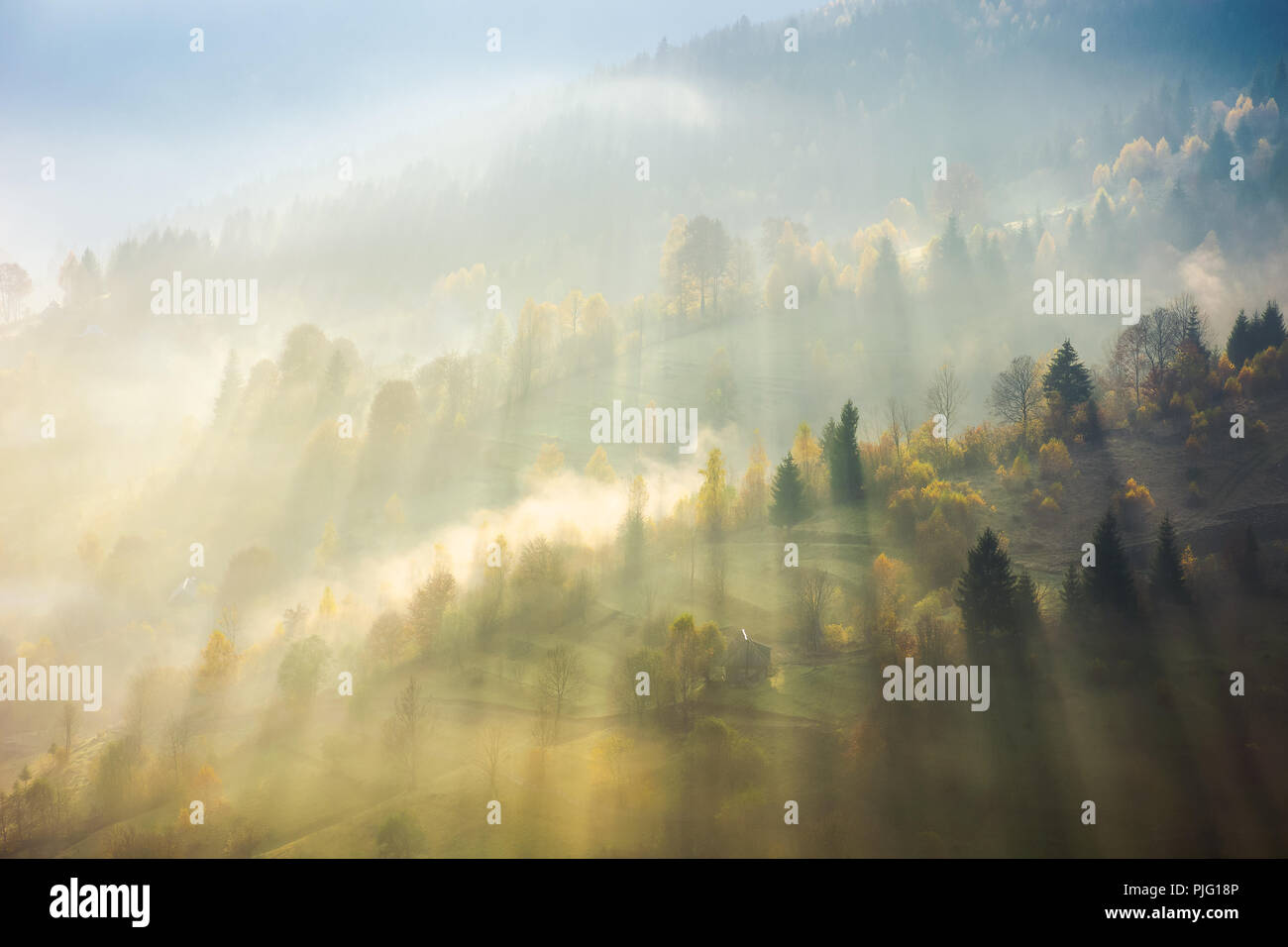 beautiful nature scene in fog. bursts of light come through haze among the trees down the hill. wonderful autumn atmosphere - Stock Image